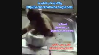 فقط میان میخورن و مِرَن هههههه (1.2.3) کانال سروش و تلگرام ahanghaye_ghadim@