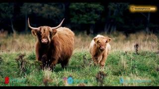 سفر به طبیعت بی نظیر اسکاتلند با موسیقی جادویی دیوید امان و تروور دی مایر - بوکینگ پرشیا bookingpersia