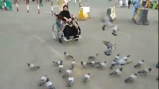 کبوتران مکه مکرمه