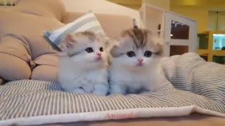 مجموعه کلیپ های بامزه از گربه ها