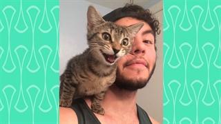دوستی گربهها و صاحبانشان