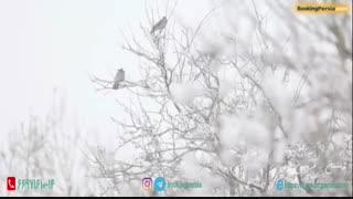 فریدون شهر زیباترین شهر زمستانی ایران و اقامتگاه مهاجران - بوکینگ پرشیا