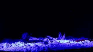 ایران تئاتر،محسن اردشیر،کمپانی سونر،   نمایش مرگ آنجلها_جنگ_سونر گیشه_30_ Iran_Mohsen ardeshir_theater_Angel's Death