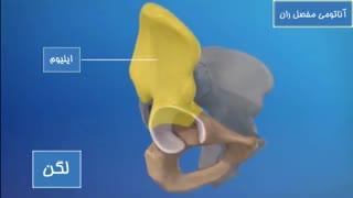 آناتومی مفصل ران