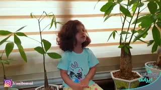 معرفی و هدیه گیاه پاچیرا توسط رونیا خانم